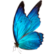 butterfly-icon2